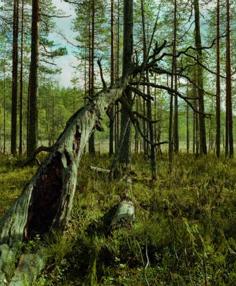 finland_scan_04