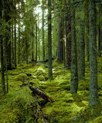 finland_scan_10